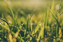 Spring Lawn Care Blog Preview